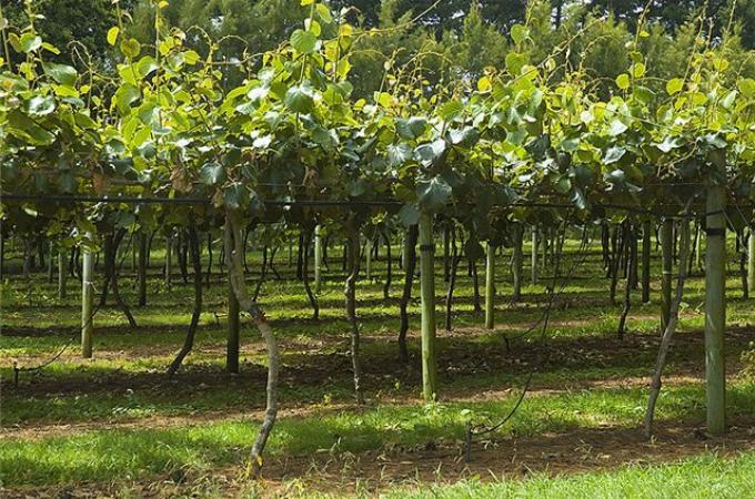 Работа на фруктовых плантациях