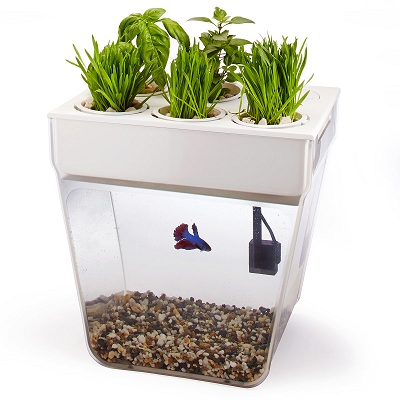 аквариум для дома
