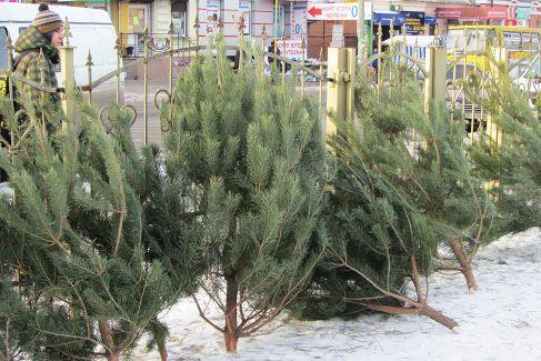 елки на базаре