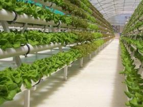 Экологический бизнес - гидропоника