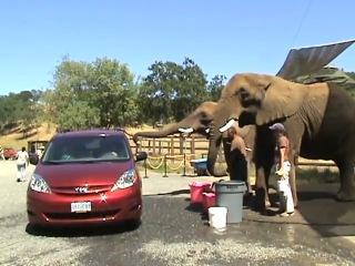 мойка машины со слоном