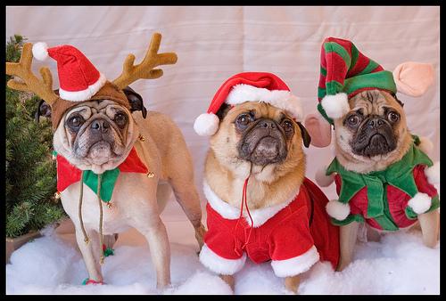 новогодние собаки