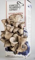 Огород для грибов у вас на кухне