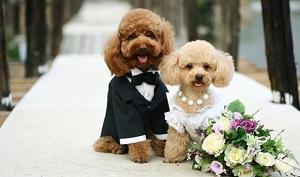 организация собачьих свадеб