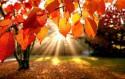 Осень – время для заработка