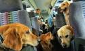 Услуги по транспортировке животных