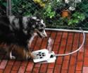 Необычная поилка для собак