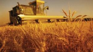 Получение сельскохозяйственного кредита