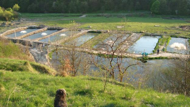 Бизнес план рыбное хозяйство