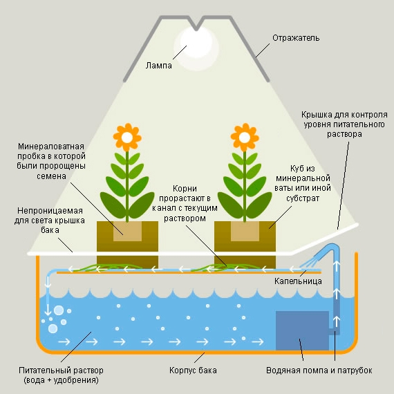 Как работает система гидропоники (основной принцип)