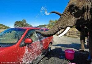 слоновья мойка машин