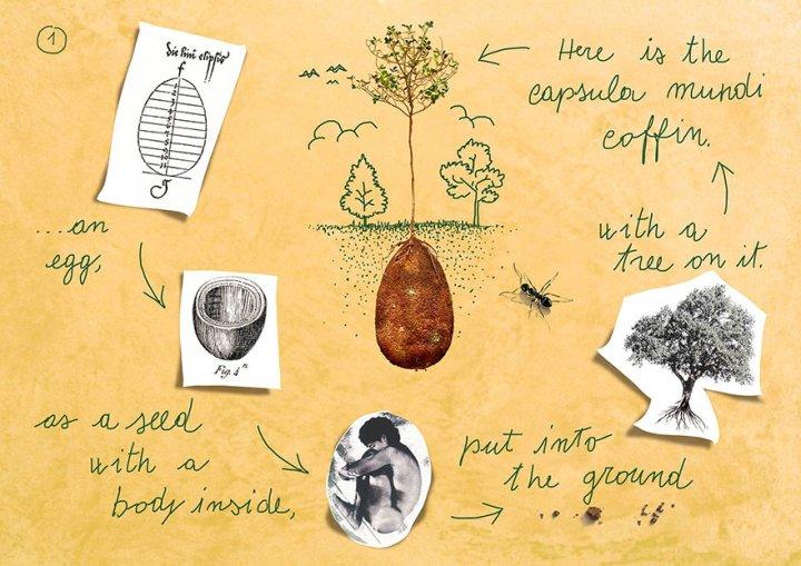 •Яйцо - семя с мертвым телом внутри помещается в землю •Вот капсула Мунди с деревом на ней