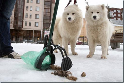 уборка за животными бизнес