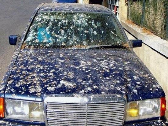 уборка птичьего кала