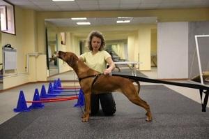 фитнес для животных