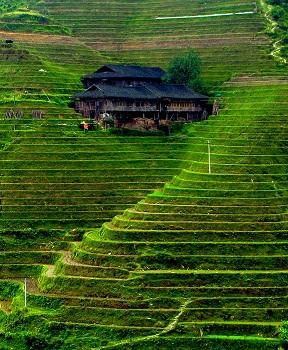экскурсия на рисовые поля