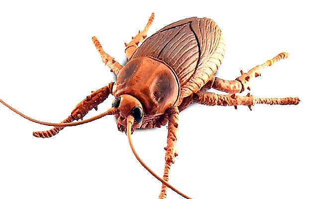 В магазине ужасов должны быть резиновые ужасные жуки и прочие атрибуты.