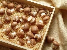 Бизнес план грибоводства бизнес план организация парикмахерской