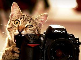Кот и камера