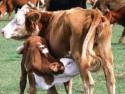 Бизнес на животноводстве