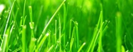 Как основать бизнес на стрижке газонов?