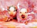 Бизнес на свиньях