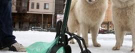 Бизнес на уборке собачьих фекалий