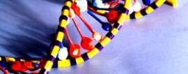 Как открыть ДНК-тестирование для кошек?