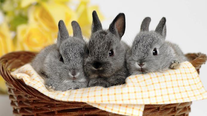 образец бизнес-план по разведению кроликов