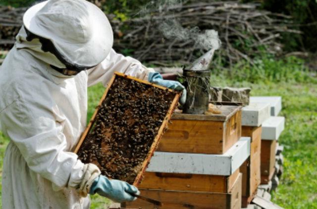 Как открыть пчеловодство? Готовый бизнес-план пчеловодства