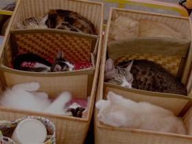 Кошка напрокат