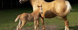 Как открыть бизнес по разведению лошадей? Готовый бизнес-план по разведению лошадей