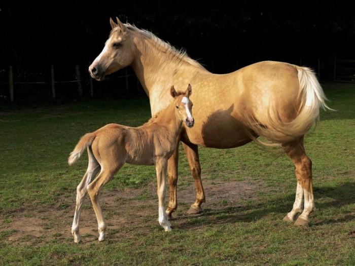 Молочное коневодство как бизнес рентабельность