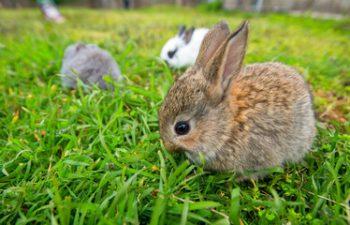Примеры бизнес планы кроликов бизнес план фирмы разделы
