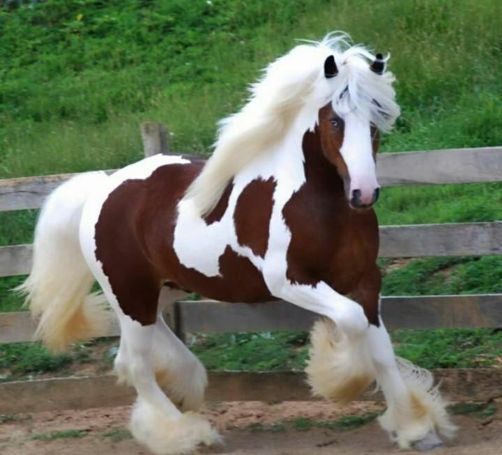 Разведение лошадей на личной конюшне