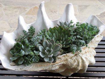 Раковина с растениями - озеленение в интерьере