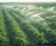 Развитие агробизнеса в России