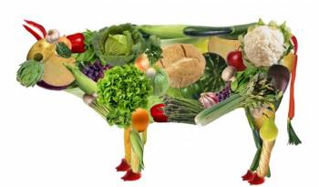 Бизнес планы пищевого производства