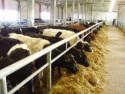 Бизнес на поставке кормов и кормовых добавок для животноводческих ферм