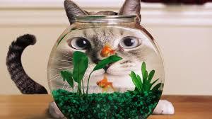 Как заработать на аквариумистике
