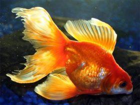 Каких рыб выбрать для разведения в домашних условиях