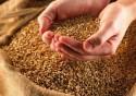 Как начать бизнес: оптовые поставки зерна