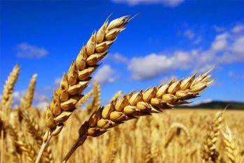 Как заработать на оптовых поставках зерна