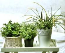 Как открыть гостиницу для комнатных растений
