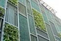 Как развить бизнес на вертикальном озеленении