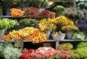 Цветочный магазин розничный: как создать свой бизнес?