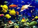 Продажа аквариумов и сопутствующих товаров