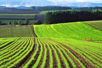 Как получить землю для учреждения частной фермы в 2019 году