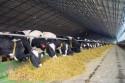 Как получить грант на развитие фермерского хозяйства