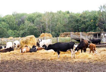 Крестьянско фермерское хозяйство какие налоги они платят: общая система налогообложения КФХ